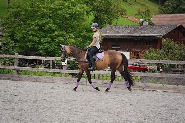 Horse Riding Schools